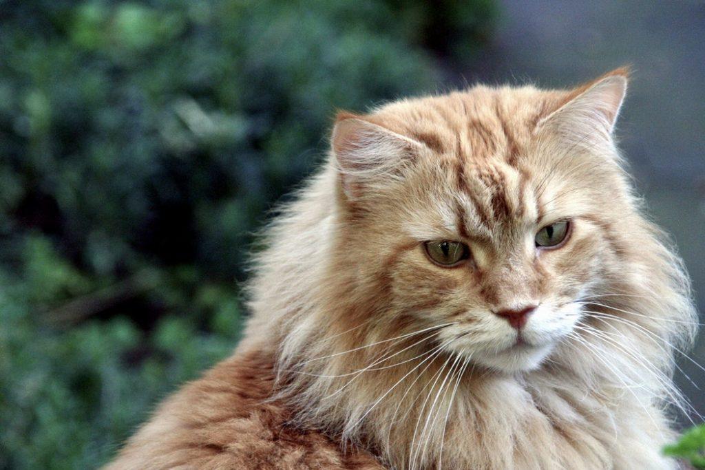 jaki kot dla dziecka? rasy kotów sprzyjające dzieciom